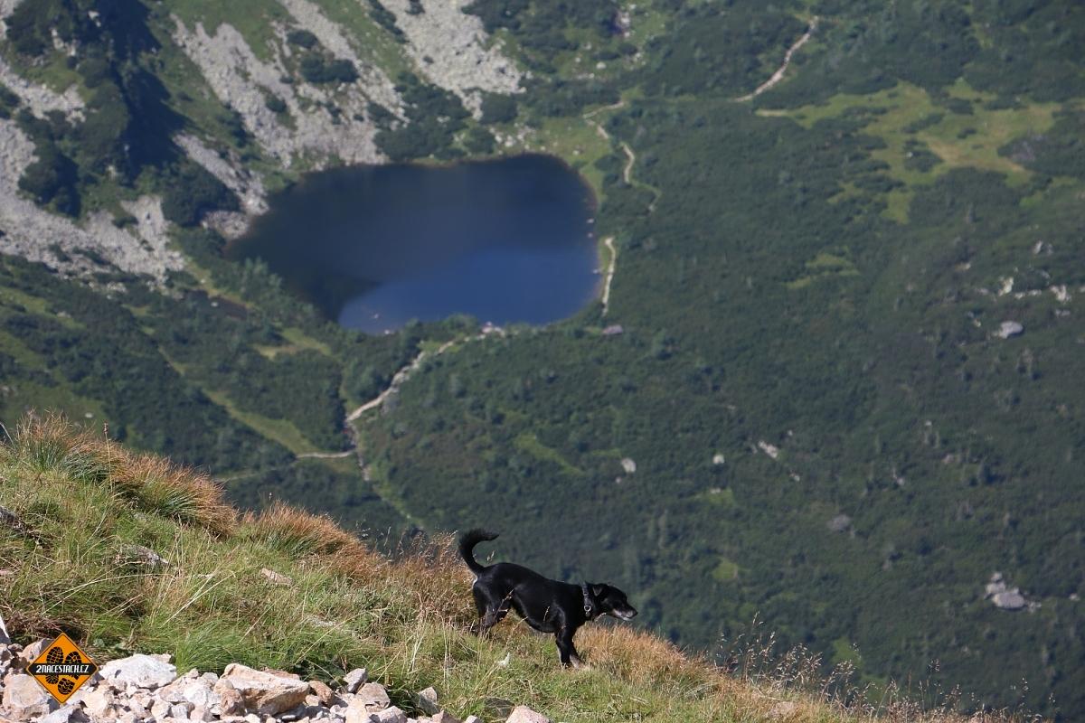 Vemte na Volovec i svého pejska