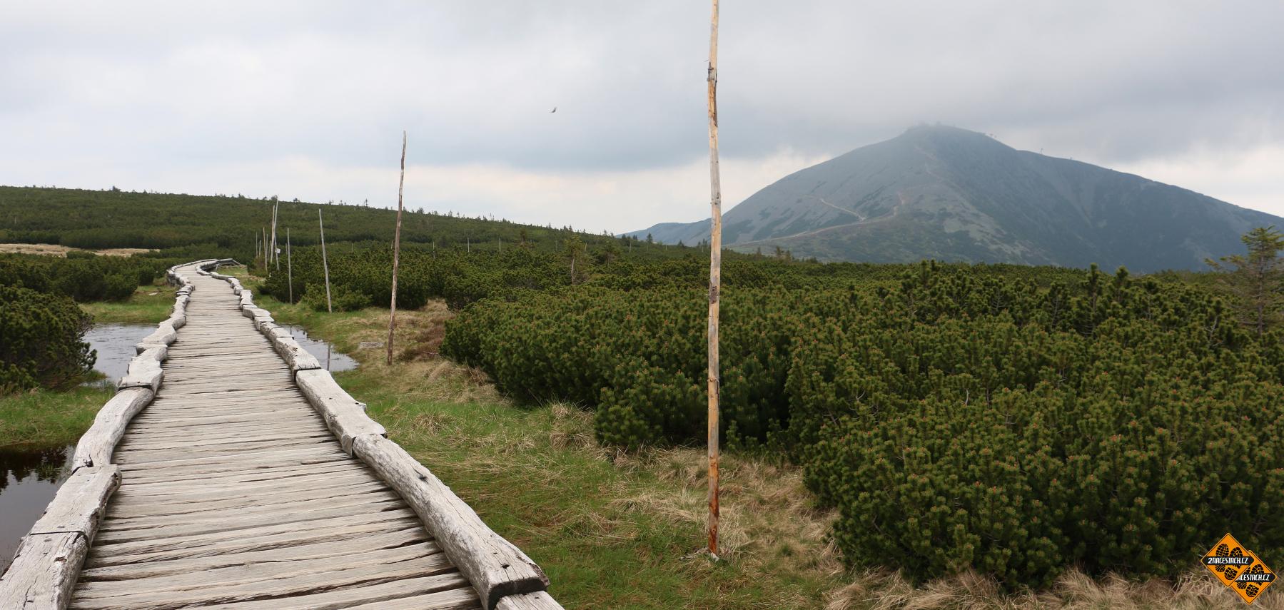 Stezka Úpským rašeliništěm