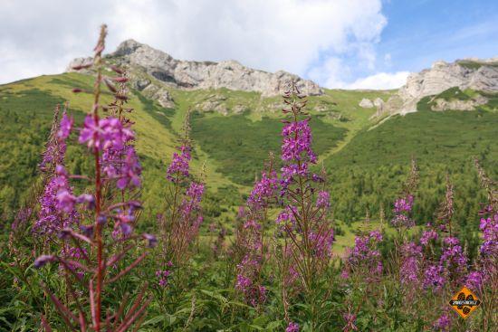 horské louky, belianské tatry