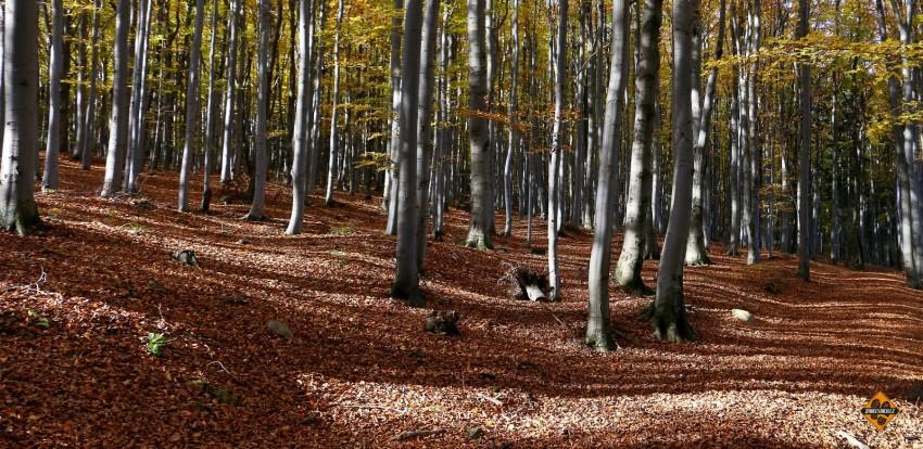 trasa javorník - borůvková hora a zpět