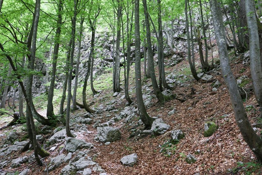 stoupání na planinu Suha z Ribčev Laz