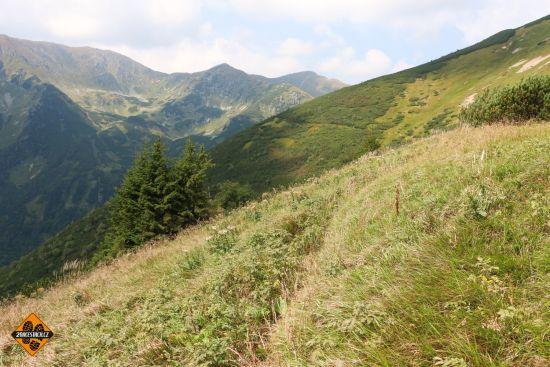 horské louky v nízkých tatrách