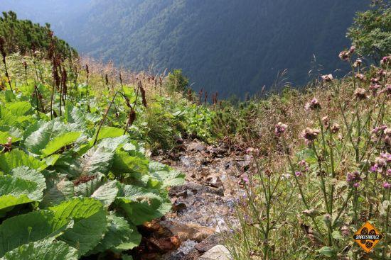 horský pramen, nízké tatry